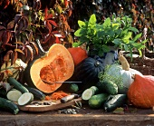 Still life with pumpkins, courgettes and cucumbers