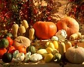 Various types of pumpkin