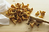 Cleaning chanterelles with a brush