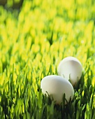 Two white eggs in grass