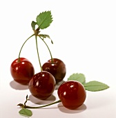 Sour cherries with stalks