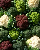 Various brassicas (broccoli, Romanesco, cauliflower)