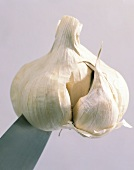Garlic bulb with knife