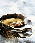 Ostriche alla francese (Oysters with sabayon, Italy)