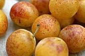 Greengages (Prunus insititia var. italica)