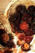 Fresh sea urchins, one opened