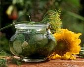 Eingelegte Gurken im Glas, Dillblüten, Sonnenblume
