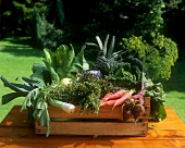 Crate of autumn vegetables on wooden table in open air