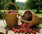 Two baskets of fresh cherries (outdoor shot)