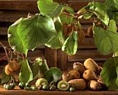Still life with kiwi fruits