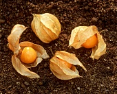 Four physalis (also known as Cape gooseberries)