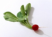 A radish with leaves