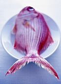 Red snapper on a plate