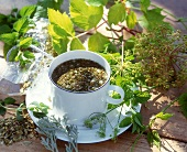 Herb tea with various fresh herbs