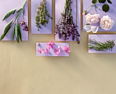 Various herbs on purple paper surfaces