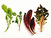 Salad leaves: rocket, watercress, radicchio, oak-leaf lettuce