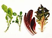Salatblätter: Rucola, Brunnenkresse, Radicchio, Eichblatt