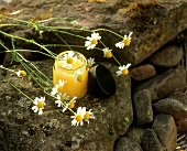 Camomile ointment and fresh camomile flowers (outdoors)
