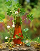 Mallow oil (medicinal remedy, also for skin and hair care)