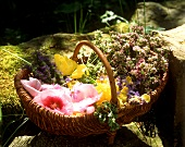 Basket of fresh flowers and herbs