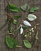 Various types of sage on wooden background