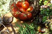 Lettuce, tomatoes and green beans in garden