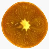 Slice of sharon fruit