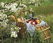 Picnic basket under flowering fruit tree