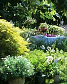 Table laid for breakfast or coffee in luxuriant garden