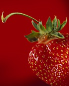 Strawberry against red background