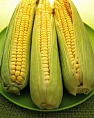 Three corncobs with husks on green plate