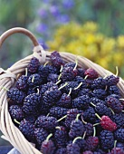 Freshly picked mulberries in a basket