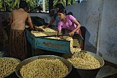Women sorting cashew nuts (India)