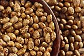 Ricinus seeds (Ricinus communis L., India)