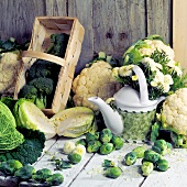Still life with different types of cabbages