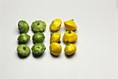 Several mini-pumpkins