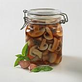 Mushrooms pickled in vinegar