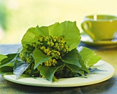 Lady's mantle in vine leaves as table decoration