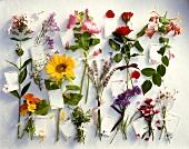 Verschiedene Sommerblumen mit Schildchen