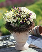 Summer marguerites and French lavender in goblet