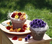 Terracotta pots of roses and thistles as table decorations