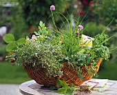 Herbs and strawberry plants in wicker basket with seed packets