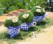 Cups decorated with bows, moss and marguerites