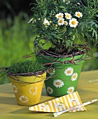 Marguerite in cache-pot and  napkin with marguerite design
