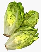 Three romaine lettuces