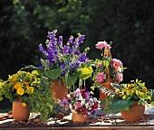 Viele Vasen mit bunten Sommersträussen: Glockenblumen, Rosen