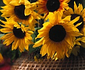 Sunflowers in close-up