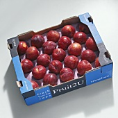 Red Lady plums (Prunus domestica, S. Africa) in packaging