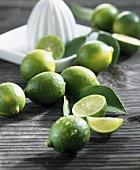 Limequat (cross: kumquat x lime)