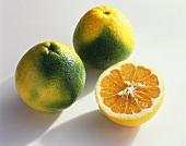 Mapo tangelo (cross: mandarin x grapefruit, Italy)